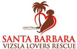 Santa Barbara Vizsla Lovers Rescue